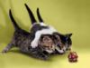 gracegrey: d20 kittens (kittens)