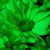 selarne: green flower (Default)