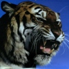 whogeek: growling tiger (Ticked Off)