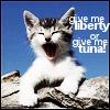 kitty_poker: (NF-Kitty tuna)