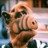 bytebuster463: (Alf)