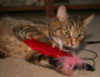 cainder: (Tamar attacking feather)