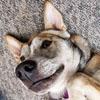 cutest_sandgirl: (Chipper by cutest_sandgirl)