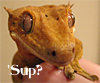 cutest_sandgirl: (Raptor)