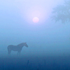 lisa_thecat: (horse)