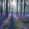 lavenderfields: (pic#11092105)