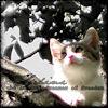 clandestine_terrors: (Sphinx cat)