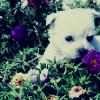 panda367: (puppy)