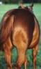 supergee: (horse's ass)