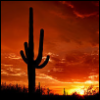 mirabile: (Saguaro Sunset)