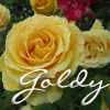 fullygoldy: Yellow Roses (Goldy Rose)