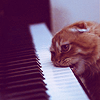 innerslytherin: (kitty eating piano)