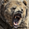 alpinebear: (aggressive)