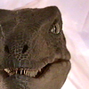 innerslytherin: (velociraptor)