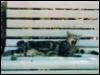 imb_irj: (Кошка)