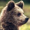 alpinebear: (^_^)