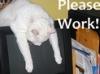 kalinda001: (Cat_Please work)