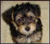 ladyofleithian: (Puppy fun!)