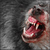 ithika: Snarling wolf for angry times! (snarl)