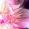 sarahkjrsten: (pink flower)