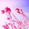 sarahkjrsten: (pink stalks)
