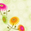 zaubra: (jk flowers)