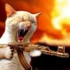 dmytrish: (wildcat)