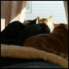 teas_me: (my kittehs)