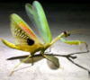 finding_tobias: (praying mantis)