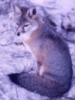 kitsune_writes: (fox) (Default)