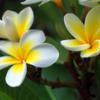 flowergarden: flowers (flower)