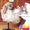 luciferino: (Кролик Роджер)