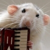 mayklusha: (musical rat)