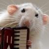 mayklusha: (musical rat)