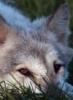 mariamara: (волк)