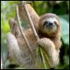 slothsnest: (ленивец)