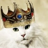 zdravbyd: (корона, кот)