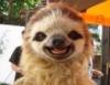 slothsnest: (ленивец с улыбкой)