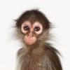 slothsnest: (обезьяна)