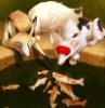 kotomyava: (лисы и рыбы)