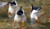 majestic_duxk: (duck bottoms)