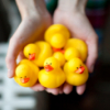 majestic_duxk: (a hand of rubber ducks)