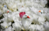 majestic_duxk: (floral ducks)