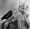 birdcatcher_911: (Default)