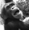 monkey_chita: (pic#11190630)
