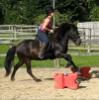 teadog1425: (tam & marco jumping!!!)