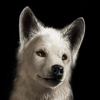 filita: (Волчонок)