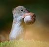 filita: (мышка)