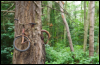 verbilki: (Bike)