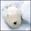zyrya: (animal - cute - sleepy seal)